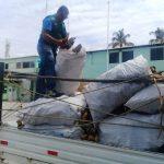En Tambogrande decomisan palo santo de procedencia ilegal