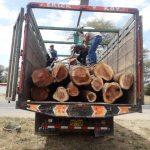 MINAGRI interviene tres camiones en Piura y Chulucanas con algarrobo y faique ilegal