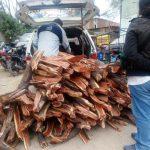 SERFOR y Policía decomisan leña y carbón de algarrobo talado ilegalmente en Tambogrande