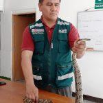 Rescatan dos serpientes en viviendas de Piura