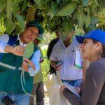MILES DE AGRICULTORES YA APLICAN CONTROL BIOLÓGICO PARA MANEJO DE PLAGAS