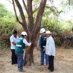Promoverán investigaciones para conservar Algarrobo