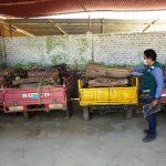 Intervienen seis motofurgones con algarrobo talado de forma ilegal
