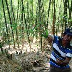 Piura celebra la Semana del Bambú para promocionar su uso