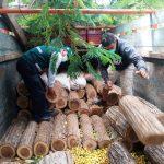 Intervienen camión con madera ilegal camuflada entre sacos de maíz y cajas de cerveza en Piura